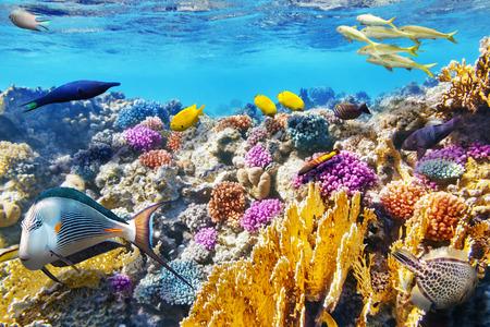 dive: Maravilloso y hermoso mundo submarino con corales y peces tropicales.