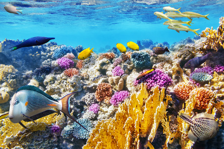underwater world: Wonderful and beautiful underwater world with corals and tropical fish. Stock Photo