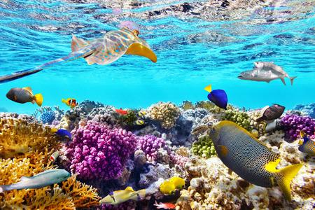 corales marinos: Maravilloso y hermoso mundo submarino con corales y peces tropicales.