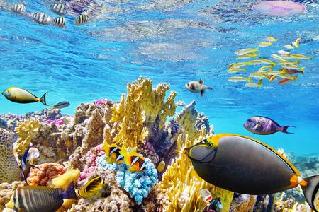 Maravilloso y hermoso mundo submarino con corales y peces tropicales.