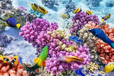 coral and fish: Wonderful and beautiful underwater world with corals and tropical fish. Stock Photo