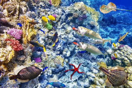 sea scenery: Wonderful and beautiful underwater world with corals and tropical fish. Stock Photo
