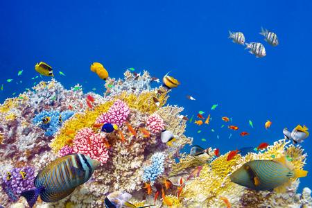 Monde sous-marin merveilleux et belle avec des coraux et des poissons tropicaux. Banque d'images - 38718107