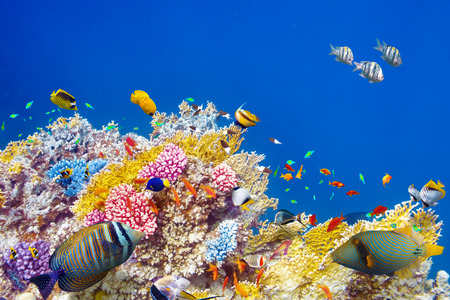 Wonderful and beautiful underwater world with corals and tropical fish. Banco de Imagens
