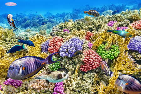 barrera: Maravilloso y hermoso mundo submarino con corales y peces tropicales.