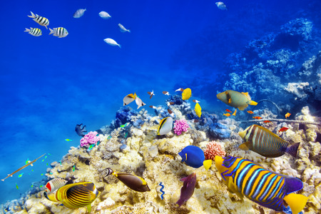 arrecife: Maravilloso y hermoso mundo submarino con corales y peces tropicales.