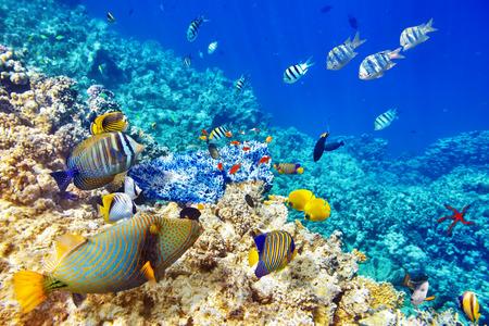 peces: Maravilloso y hermoso mundo submarino con corales y peces tropicales.