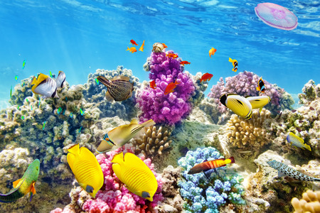seascape: Wonderful and beautiful underwater world with corals and tropical fish. Stock Photo