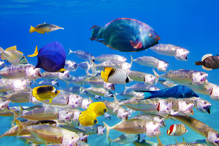 firefish: Wonderful and beautiful underwater world with corals and tropical fish. Stock Photo