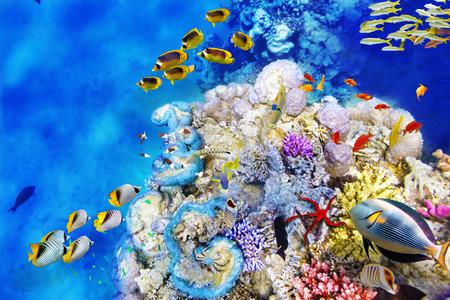 サンゴと熱帯魚の素晴れらしい、美しいの水中の世界。