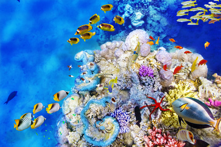 Wonderful and beautiful underwater world with corals and tropical fish. Banque d'images