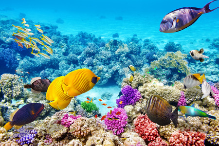 under the sea: Wonderful and beautiful underwater world with corals and tropical fish. Stock Photo