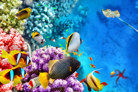 Wonderful and beautiful underwater world with corals and tropical fish. 版權商用圖片 - 38718364