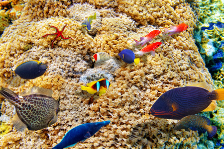 goniopora: Goniopora djiboutiensis -wonderful  underwater world with corals and tropical fish. Stock Photo