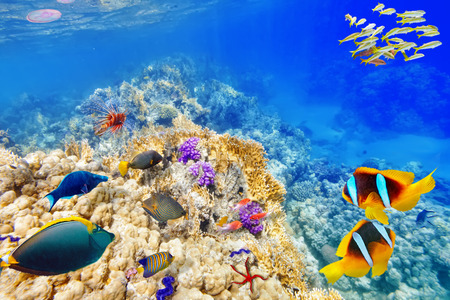 el sheikh: Wonderful and beautiful underwater world with corals and tropical fish. Stock Photo