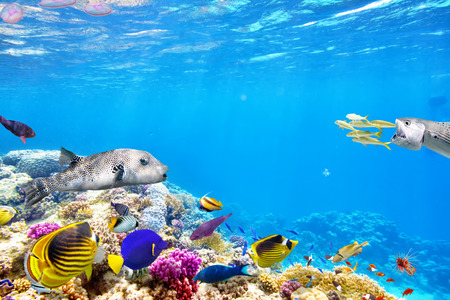 Wonderful and beautiful underwater world with corals and tropical fish. Archivio Fotografico