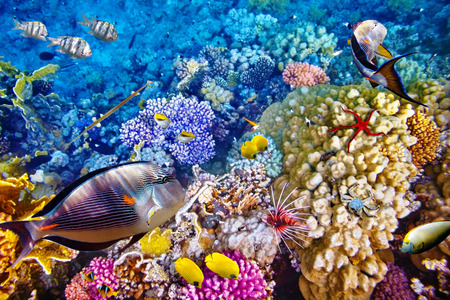 Great: Wonderful and beautiful underwater world with corals and tropical fish. Stock Photo