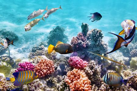 Maravilloso y hermoso mundo submarino con corales y peces tropicales. Foto de archivo - 39327824