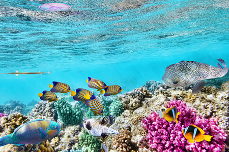 Monde sous-marin merveilleux et belle avec des coraux et des poissons tropicaux. Banque d'images - 39327832