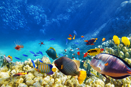 Wonderful and beautiful underwater world with corals and tropical fish. Stock Photo