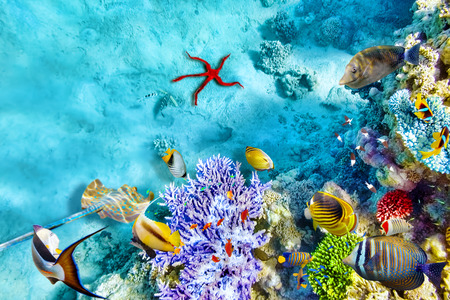 reef fish: Wonderful and beautiful underwater world with corals and tropical fish. Stock Photo