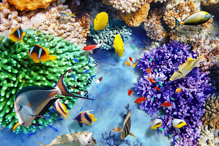 Wonderful and beautiful underwater world with corals and tropical fish. 스톡 콘텐츠