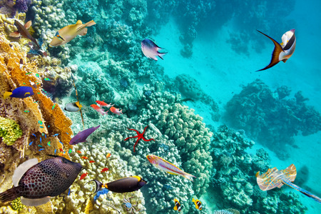submerge: Wonderful and beautiful underwater world with corals and tropical fish. Stock Photo