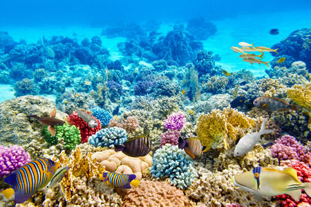 Maravilloso y hermoso mundo submarino con corales y peces tropicales. Foto de archivo - 39566948