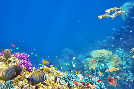 coral ocean: Wonderful and beautiful underwater world with corals and tropical fish. Stock Photo