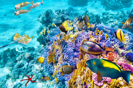 underwater: Wonderful and beautiful underwater world with corals and tropical fish. Stock Photo