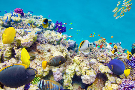 sharm el sheikh: Wonderful and beautiful underwater world with corals and tropical fish. Stock Photo