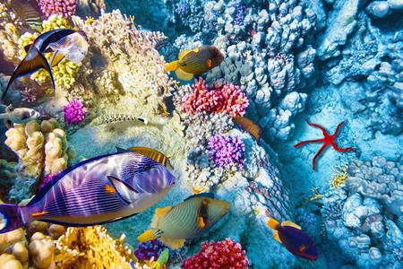 pez pecera: Maravilloso y hermoso mundo submarino con corales y peces tropicales.