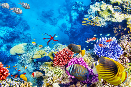 at sea: Wonderful and beautiful underwater world with corals and tropical fish. Stock Photo