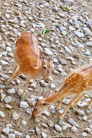 habitat: Young deer in their natural habitat.
