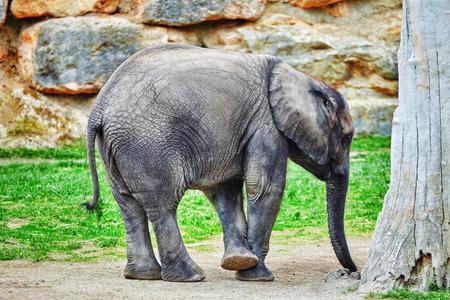 habitat: Large Indian elephants its natural habitat.