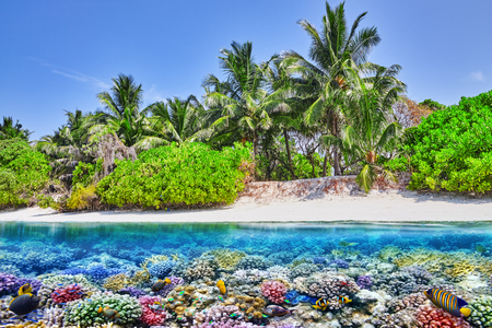 Tropical island and the underwater world in the Maldives. Thoddoo island. Stock Photo