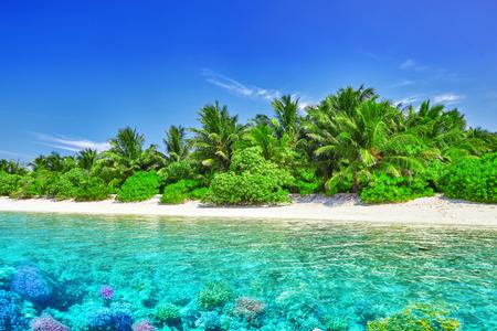 barrera: Isla tropical y el mundo bajo el agua en las Maldivas. Thoddoo isla. Foto de archivo