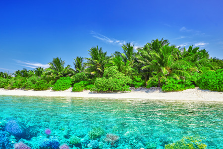 tropical beaches: Tropical island and the underwater world in the Maldives. Thoddoo island.