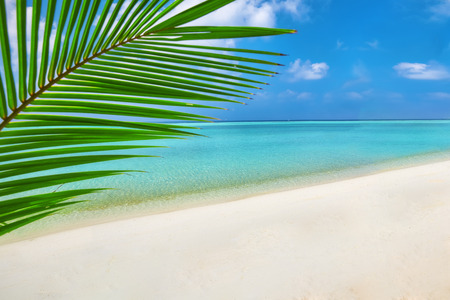 waves: Shoreline of a tropical island in the Maldives and view of the Indian Ocean.