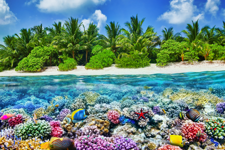 sea world: Tropical island and the underwater world in the Maldives. Thoddoo island.