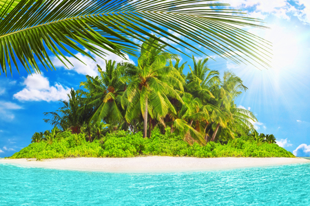 subtropical: Whole tropical island within atoll in tropical Ocean on a summer day. Uninhabited and wild subtropical isle with palm trees. Equatorial part of the ocean, tropical island resort.