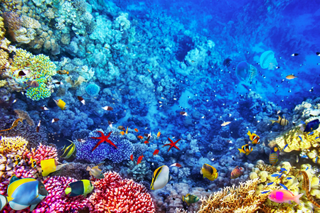 firefish: Underwater world with corals and tropical fish. Stock Photo