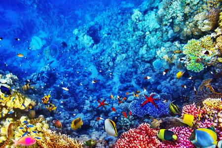 Maravilloso y hermoso mundo submarino con corales y peces tropicales. Foto de archivo - 57950073