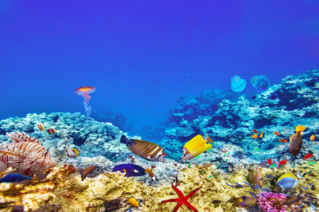 a wonderful world: Wonderful and beautiful underwater world with corals and tropical fish. Stock Photo
