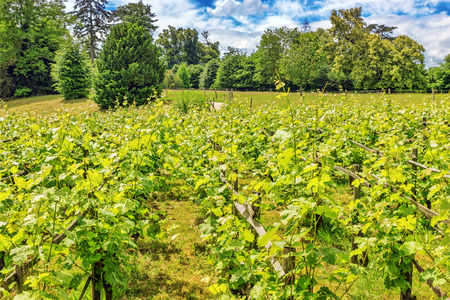 Vineyards in the French countryside on a sunny day.