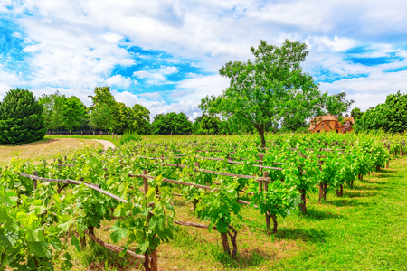 Vineyards in the French countryside on a sunny day. France.