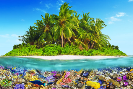 dominican: Tropical island within atoll in tropical Ocean and wonderful and beautiful underwater world with corals and tropical fish.