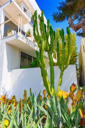 Wild cactus  in natural habitat conditions. USA.