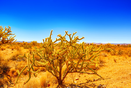 Wild cactus  in natural habitat conditions. USA.