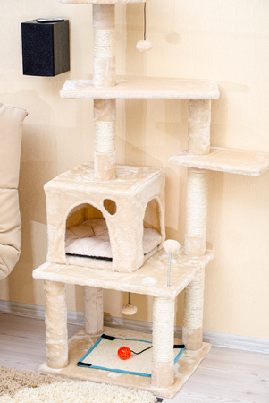 Cute funny cat tree in the living  room with scratcher. Stock Photo